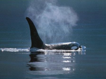 Hbitat de las ballenas orcas  ORCAPEDIA