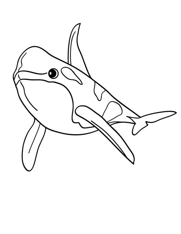 dibujo ballena orca